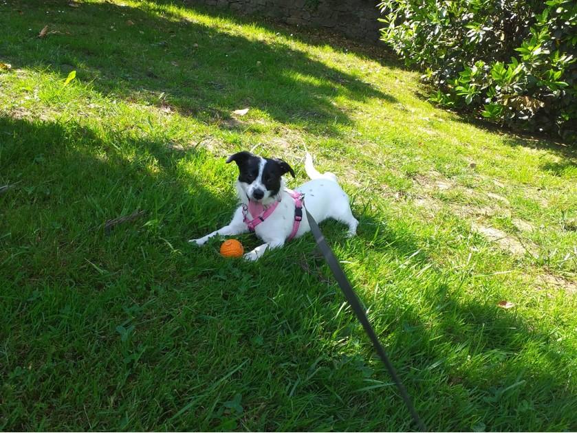 Bildertagebuch - TINA, fröhliche kleine Hundedame sucht ein neues Zuhause - ZUHAUSE in SPANIEN gefunden- 36110344yt