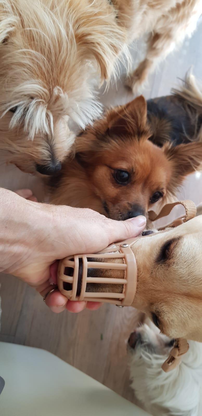 Bildertagebuch - Bimba wollte die Familie nicht mehr.... und landete bei Tierschutzkollegen in Mailand 36110937oe