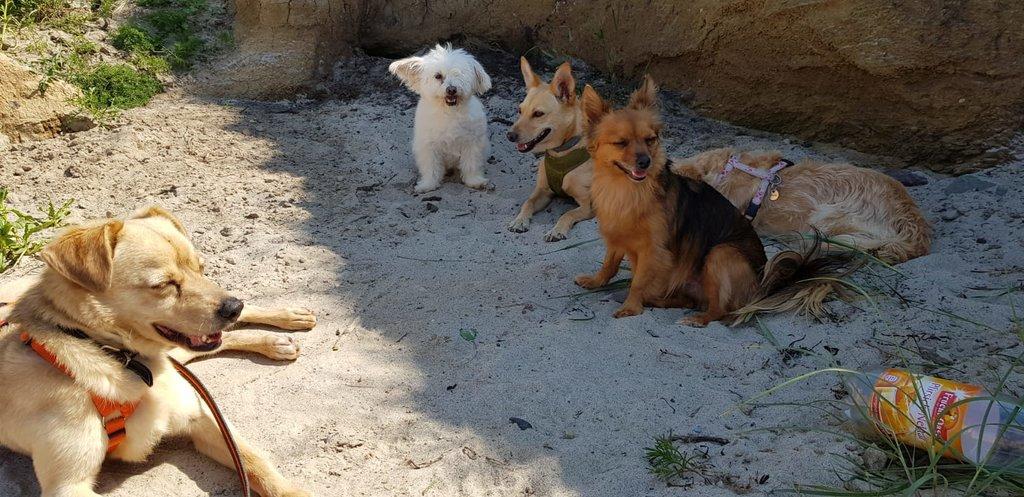 Bildertagebuch - Bimba wollte die Familie nicht mehr.... und landete bei Tierschutzkollegen in Mailand 36110940tr
