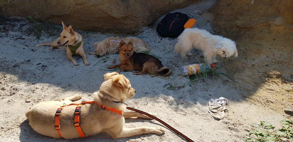 Bildertagebuch - Bimba wollte die Familie nicht mehr.... und landete bei Tierschutzkollegen in Mailand 36110945wy