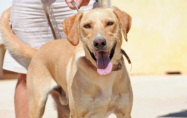 buster - Bildertagebuch - BUSTER, ein Traumhund wurde streunend aufgefunden - VERMITTELT - 36184165eq