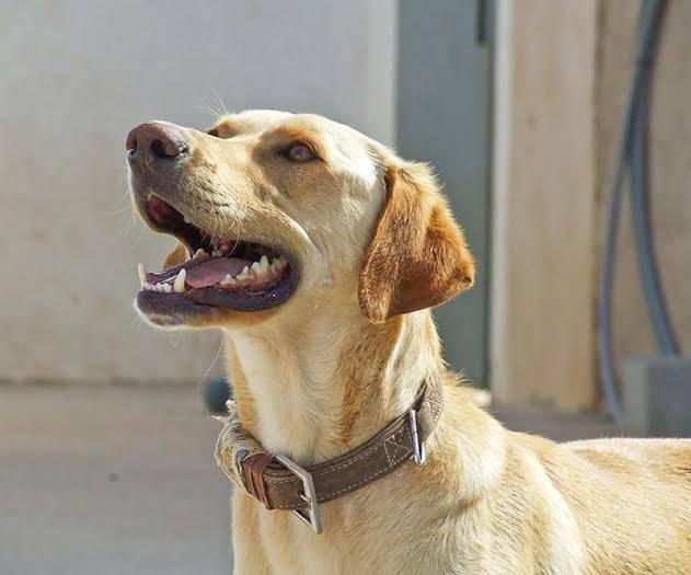 Bildertagebuch - BUSTER, ein Traumhund wurde streunend aufgefunden - VERMITTELT - 36184166kr