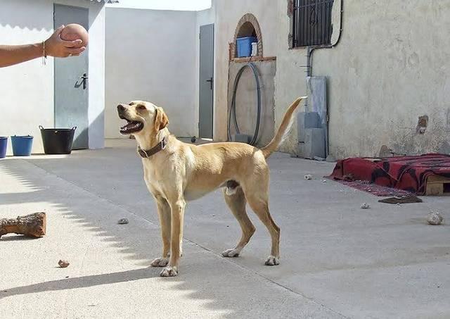 Bildertagebuch - BUSTER, ein Traumhund wurde streunend aufgefunden - VERMITTELT - 36184167ol