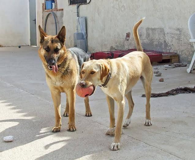 buster - Bildertagebuch - BUSTER, ein Traumhund wurde streunend aufgefunden - VERMITTELT - 36184169kx