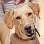 Bildertagebuch - BUSTER, ein Traumhund wurde streunend aufgefunden - VERMITTELT - 36184204is