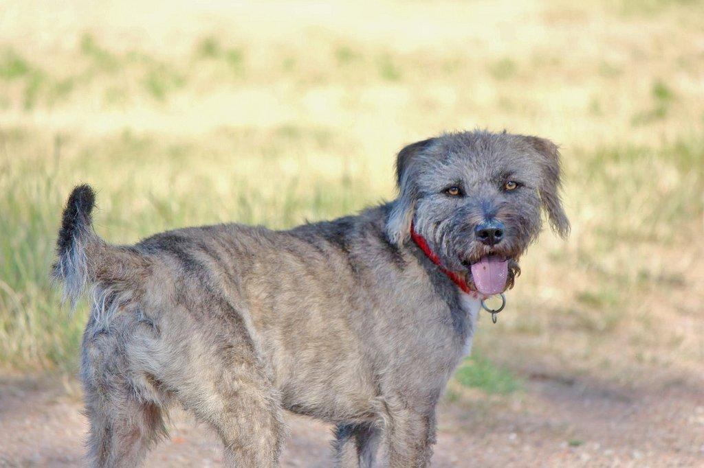 Bildertagebuch - Freddy (ehem. Django), verspielter Hund mit Flausen im Kopf - VERMITTELT! 36192464og