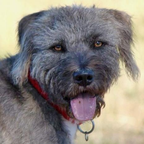 Bildertagebuch - Freddy (ehem. Django), verspielter Hund mit Flausen im Kopf - VERMITTELT! 36192465dd