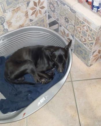 Bildertagebuch - Kalimero...ein kleiner, schwarzer Hund, den niemand mehr wollte...ZUHAUSE IN ITALIEN gefunden! 36226415ge