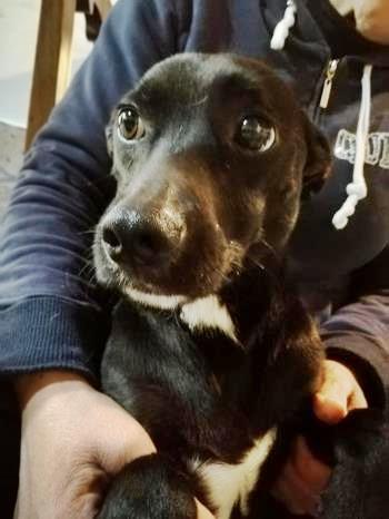 Bildertagebuch - Kalimero...ein kleiner, schwarzer Hund, den niemand mehr wollte...ZUHAUSE IN ITALIEN gefunden! 36226417jc