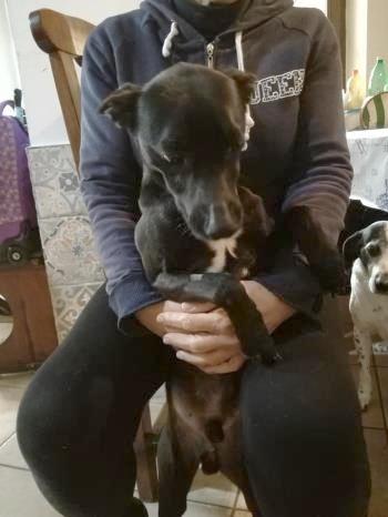 Bildertagebuch - Kalimero...ein kleiner, schwarzer Hund, den niemand mehr wollte...ZUHAUSE IN ITALIEN gefunden! 36226418rd