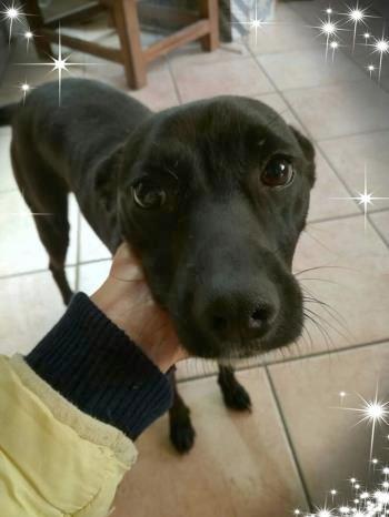 Bildertagebuch - Kalimero...ein kleiner, schwarzer Hund, den niemand mehr wollte...ZUHAUSE IN ITALIEN gefunden! 36226419hb