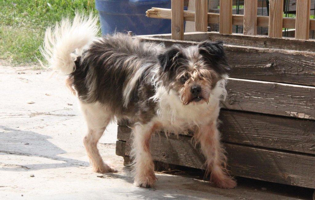 Bildertagebuch - Grifo, ein sehr lieber kleiner Bub, musste sein ganzes Leben auf einem Firmengelände verbringen...VERMITTELT! 36261069ac