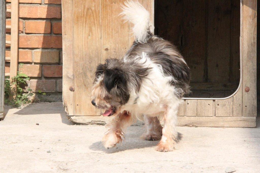 Bildertagebuch - Grifo, ein sehr lieber kleiner Bub, musste sein ganzes Leben auf einem Firmengelände verbringen...VERMITTELT! 36261072qi