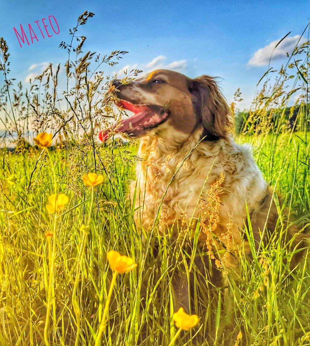 Bildertagebuch - Mata, ein hübscher Bub möchte gerne mit seinen  Menchen durch dick und dünn gehen - VERMITTELT - 36328347ds