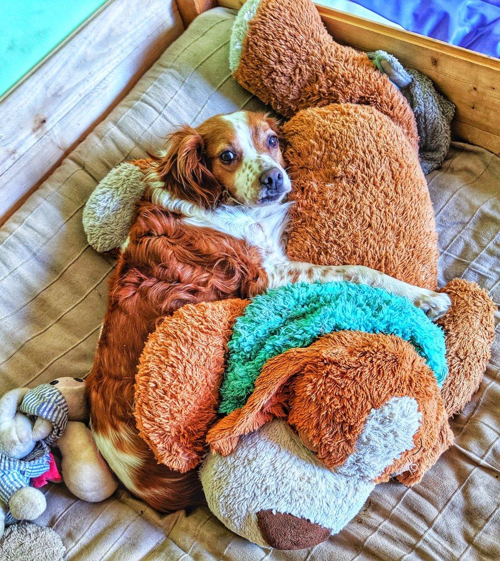 Bildertagebuch - Mata, ein hübscher Bub möchte gerne mit seinen  Menchen durch dick und dünn gehen - VERMITTELT - 36328354qp