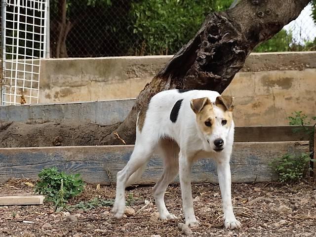 Bildertagebuch - Zarza, möchte ein stattliches Hundemädchen werden - ÜBER ANDERE ORGA VERMITTELT - 36363863ys