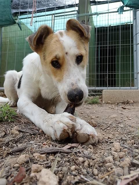 Bildertagebuch - Zarza, möchte ein stattliches Hundemädchen werden - ÜBER ANDERE ORGA VERMITTELT - 36363866ss