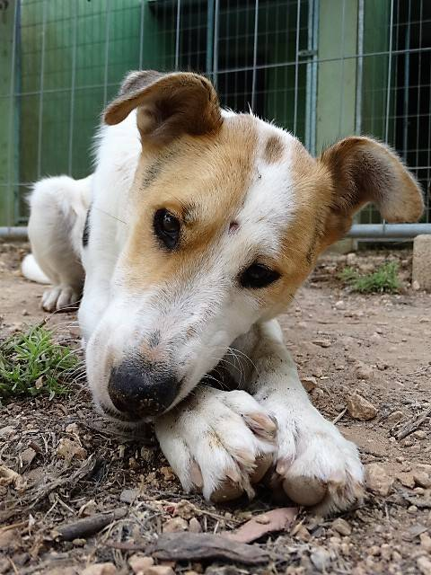 Bildertagebuch - Zarza, möchte ein stattliches Hundemädchen werden - ÜBER ANDERE ORGA VERMITTELT - 36363867on
