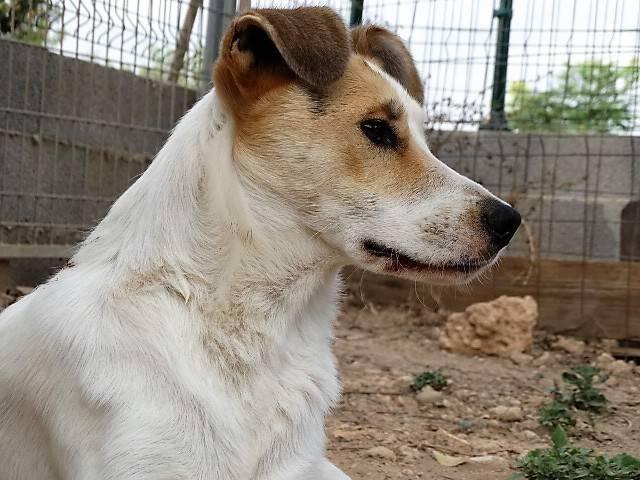 Bildertagebuch - Zarza, möchte ein stattliches Hundemädchen werden - ÜBER ANDERE ORGA VERMITTELT - 36363872di