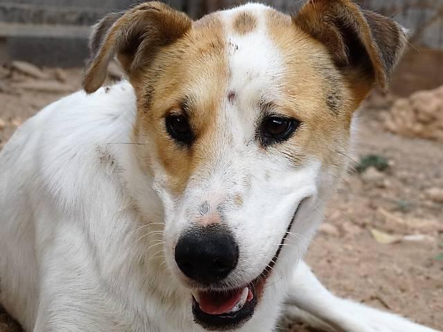 Bildertagebuch - Zarza, möchte ein stattliches Hundemädchen werden - ÜBER ANDERE ORGA VERMITTELT - 36363873uv