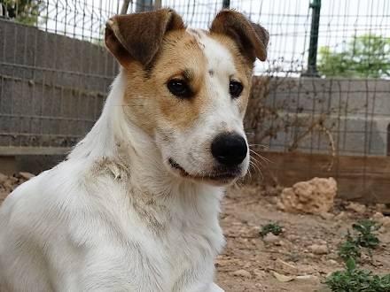 Bildertagebuch - Zarza, möchte ein stattliches Hundemädchen werden - ÜBER ANDERE ORGA VERMITTELT - 36363874li