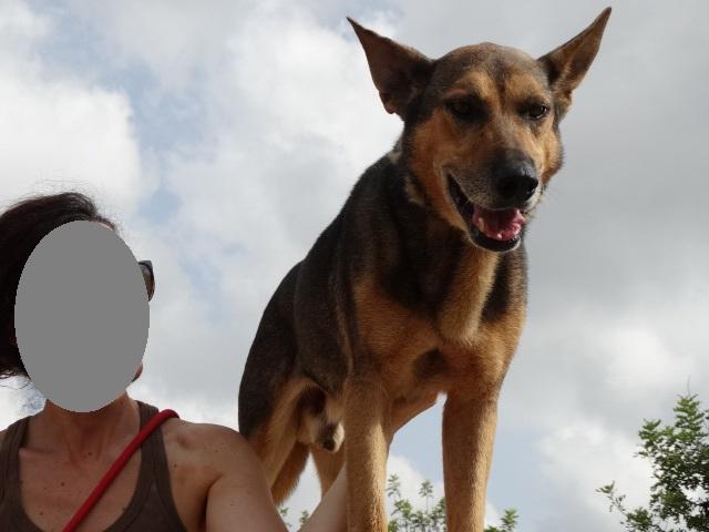 Bildertagebuch - Pupi, möchte endlich auf der Sonnenseite des Lebens stehen! 36421892fm