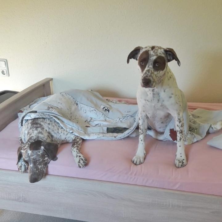 Bildertagebuch -  MARTA und MARIA kamen zusammen ins Rescue von Alicante..... 36473134on