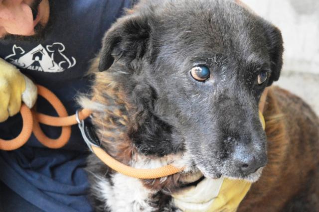 Bildertagebuch - GILDINA war jahrelang in italienischen Tierheimen weggesperrt 36485709hc