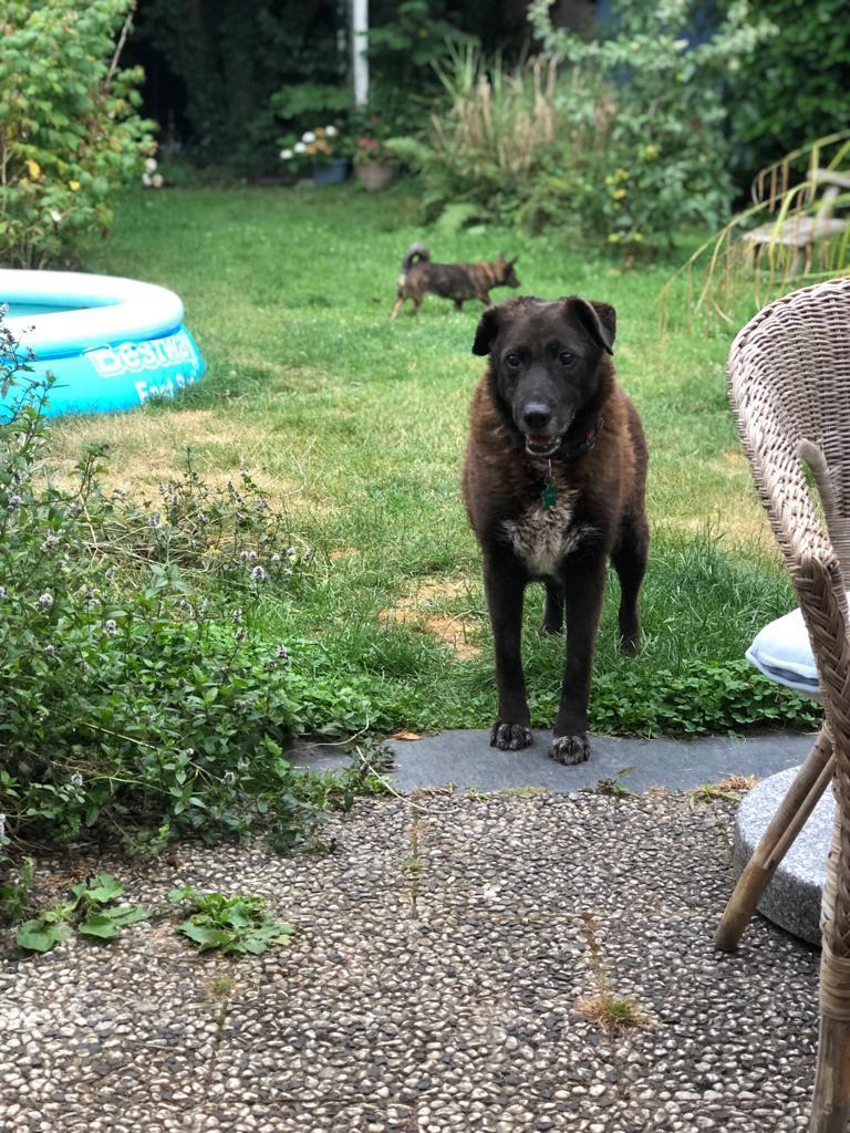 Bildertagebuch - GILDINA war jahrelang in italienischen Tierheimen weggesperrt 36485712mq