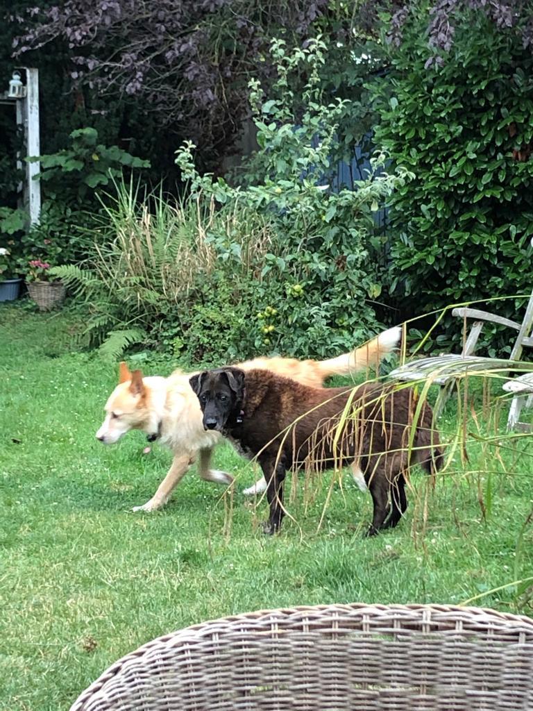Bildertagebuch - GILDINA war jahrelang in italienischen Tierheimen weggesperrt 36485713qe