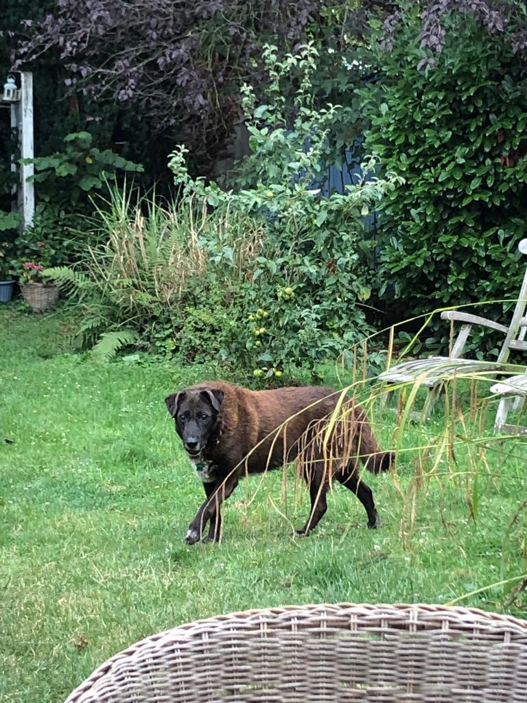 Bildertagebuch - GILDINA war jahrelang in italienischen Tierheimen weggesperrt 36485716xz