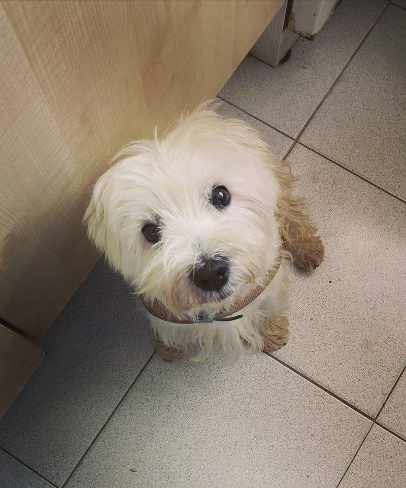Bildertagebuch - Paco: Selbstbewußter, kleiner Terriersenior sucht sein Zuhause! VERMITTELT! 36541831is
