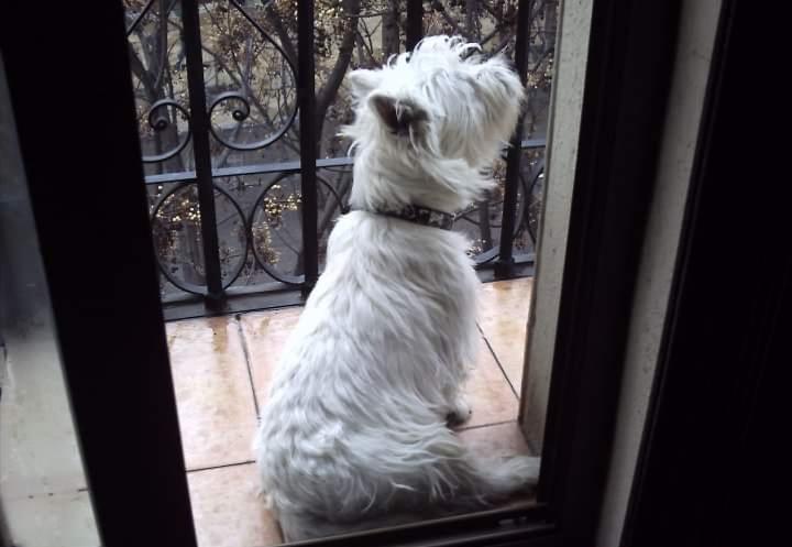Bildertagebuch - Paco: Selbstbewußter, kleiner Terriersenior sucht sein Zuhause! VERMITTELT! 36541839fk