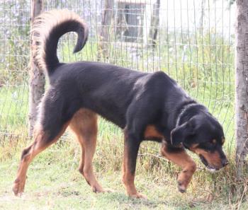 Bildertagebuch - Carlotta, wer zeigt ihr das Hunde 1x1 - über andere Orga vermittelt - 36713786ab