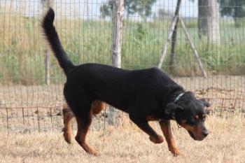 Bildertagebuch - Carlotta, wer zeigt ihr das Hunde 1x1 - über andere Orga vermittelt - 36713792wc