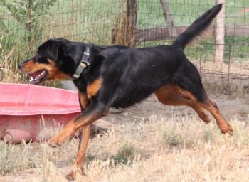 Bildertagebuch - Carlotta, wer zeigt ihr das Hunde 1x1 - über andere Orga vermittelt - 36713795mr