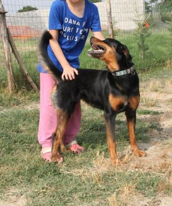Bildertagebuch - Carlotta, wer zeigt ihr das Hunde 1x1 - über andere Orga vermittelt - 36713796tw
