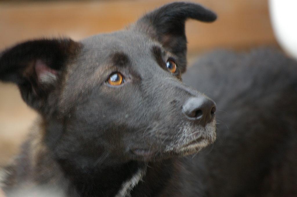 Bildertagebuch - Patty hatte bis jetzt kein schönes Hundeleben - VERMITTELT - 36878200ae