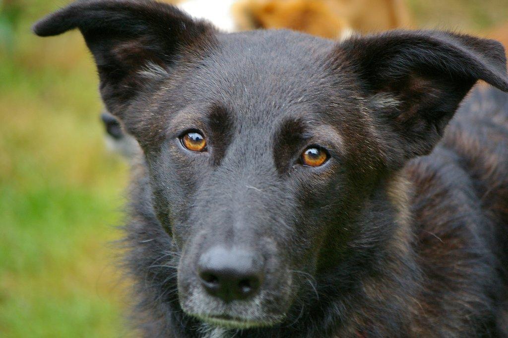 Bildertagebuch - Patty hatte bis jetzt kein schönes Hundeleben - VERMITTELT - 36878203cl