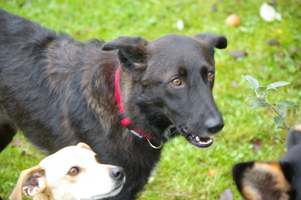 Bildertagebuch - Patty hatte bis jetzt kein schönes Hundeleben - VERMITTELT - 36878209oh