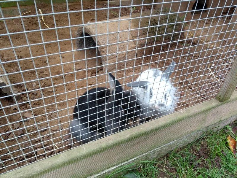 Kaninchen Sterben Nacheinander
