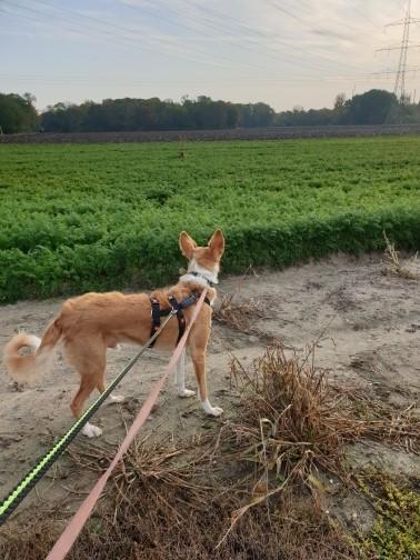 Bildertagebuch - TRECE, ein Traumhund - VERMITTELT - 37142634pm