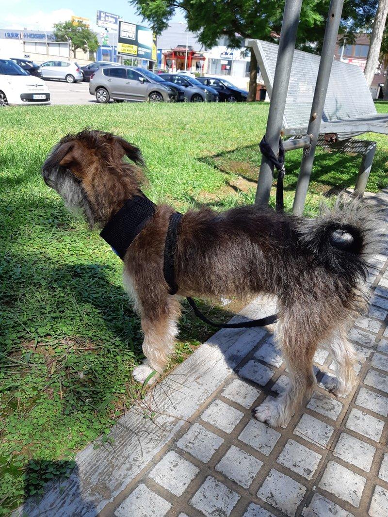 Bildertagebuch - Catalina: kleine, super süße Strubbelmaus sucht ihre Familie - VERMITTELT - 37176057cx