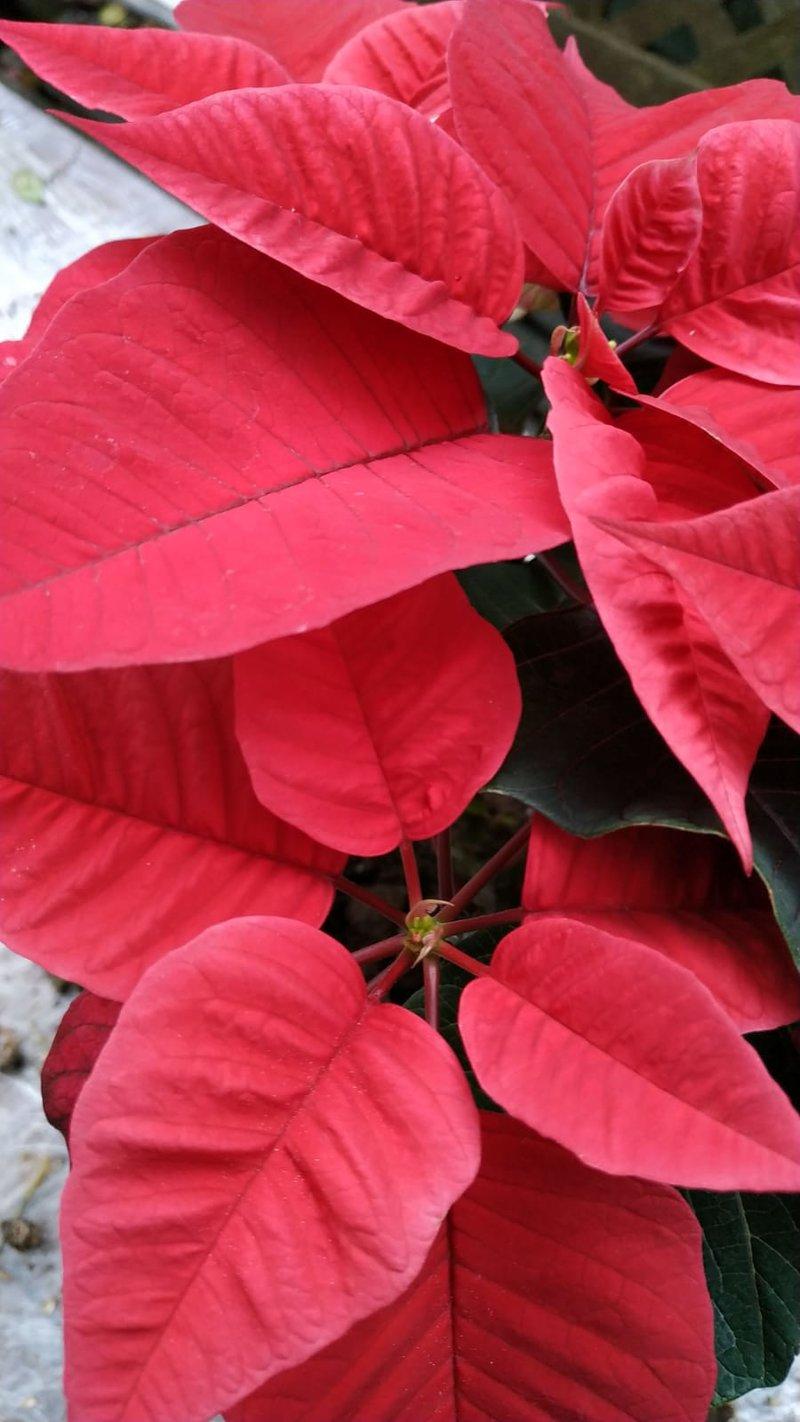 Weihnachtskrippen (Sammelthema) 37282093ns