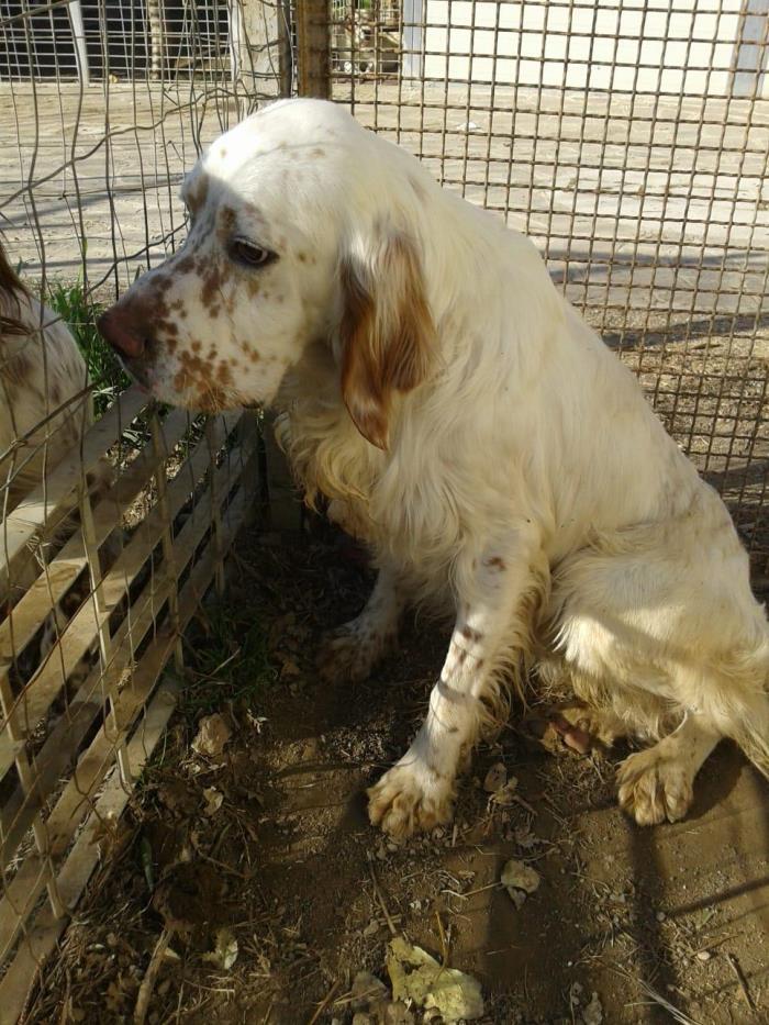 Bildertagebuch - MERLIN kommt von einem italienischen Züchter 37747841rt