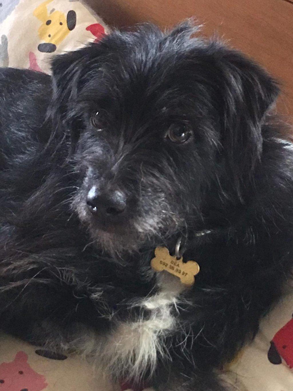 Bildertagebuch - JANO, seine Familie gab ihn einfach bei den Tierschützern ab - ÜBER ANDERE ORGA VERMITTELT - 37752800in