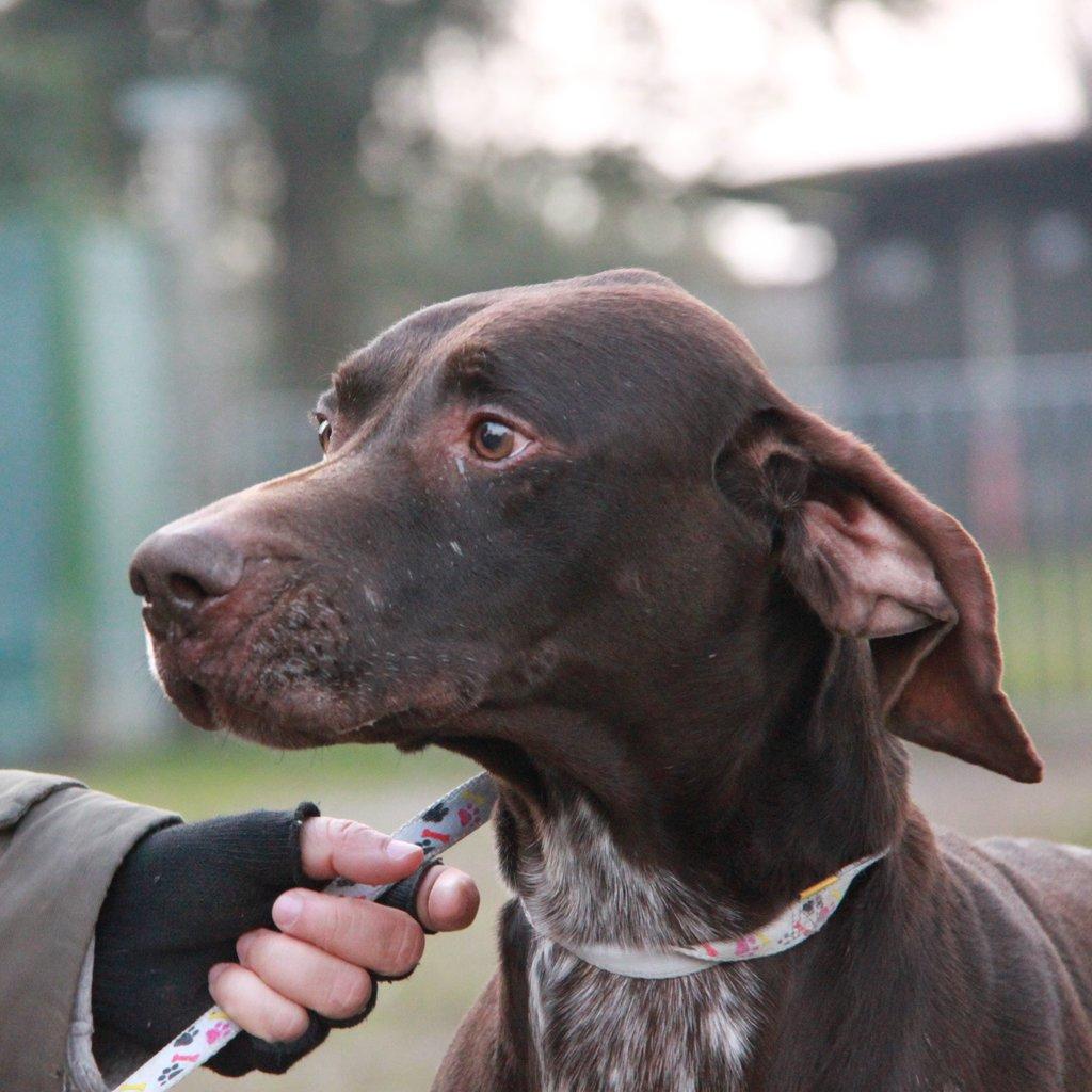 Bildertagebuch - STEN, nach 6 Jahren bei einem Jäger und 2 Jahren in einer Tierpension sucht er nun seine Menschen... 37782718uw
