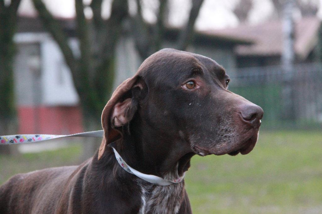Bildertagebuch - STEN, nach 6 Jahren bei einem Jäger und 2 Jahren in einer Tierpension sucht er nun seine Menschen... 37782770bu