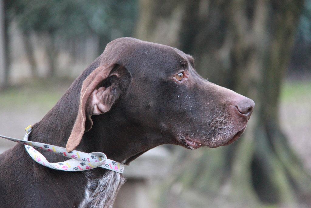 Bildertagebuch - STEN, nach 6 Jahren bei einem Jäger und 2 Jahren in einer Tierpension sucht er nun seine Menschen... 37782781ol
