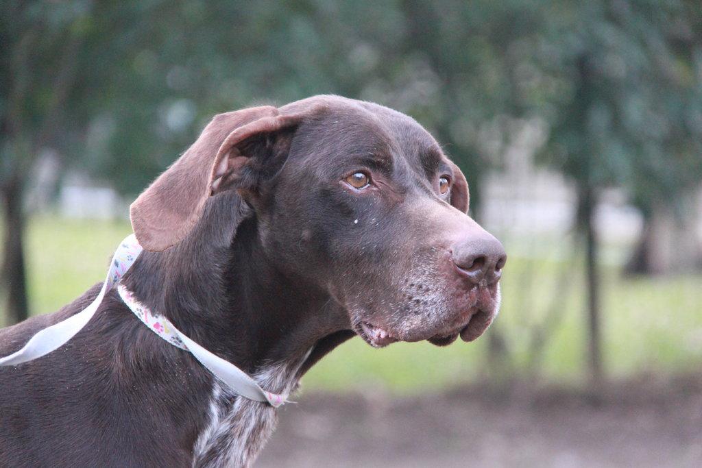 Bildertagebuch - STEN, nach 6 Jahren bei einem Jäger und 2 Jahren in einer Tierpension sucht er nun seine Menschen... 37782786nb